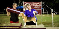 2017 - The Beagle Club of QLD Inc. Open Show (25/02/2017)