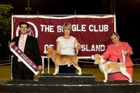 2014 - The Beagle Club of QLD 20th Open Show