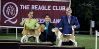 2018 - The Beagle Club of QLD Inc. Open Show