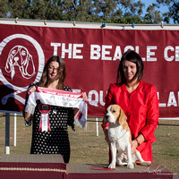 2018 - The Beagle Club of QLD Inc. - 24th Championship Show