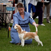 2010 - Caboolture Kennel Club (20/11/2010)